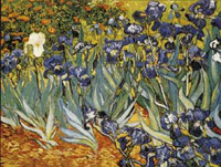 Irises (garden view)