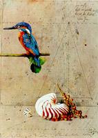 Kingfisher wer weiss..