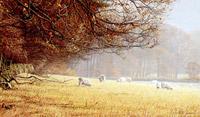 Autumn sheepscape