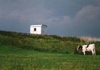 De koe en de keet