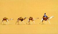 Caravanes du sel,tenere, sahara